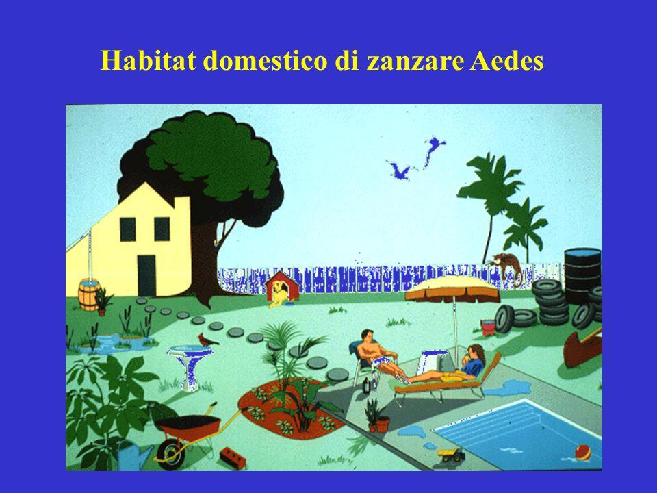 Habitat domestico di zanzare Aedes