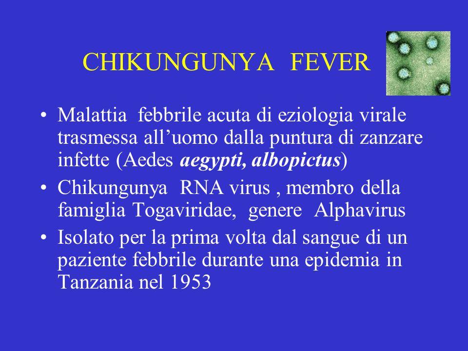 CHIKUNGUNYA FEVER Malattia febbrile acuta di eziologia virale trasmessa all'uomo dalla puntura di zanzare infette (Aedes aegypti, albopictus) Chikungunya RNA virus, membro della famiglia Togaviridae, genere Alphavirus Isolato per la prima volta dal sangue di un paziente febbrile durante una epidemia in Tanzania nel 1953