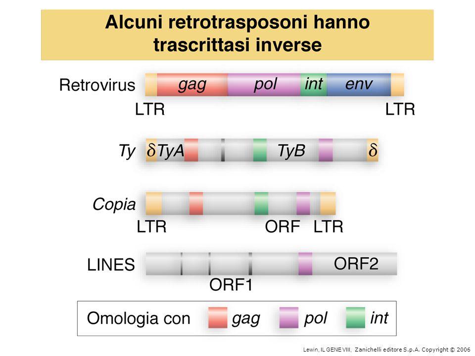 LINE (long interspersed nuclear element) Contengono trascrittasi inversa Derivano da trascritti pol II Es.