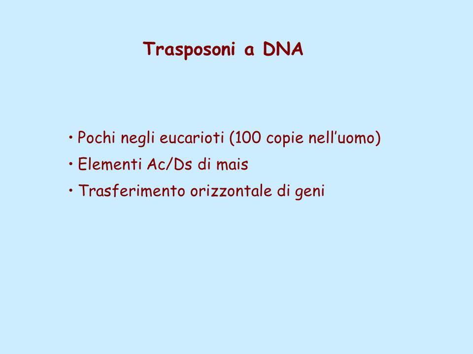 Trasposoni a DNA Pochi negli eucarioti (100 copie nell'uomo) Elementi Ac/Ds di mais Trasferimento orizzontale di geni