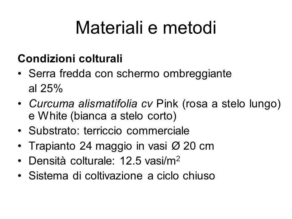 Materiali e metodi Condizioni colturali Serra fredda con schermo ombreggiante al 25% Curcuma alismatifolia cv Pink (rosa a stelo lungo) e White (bianc