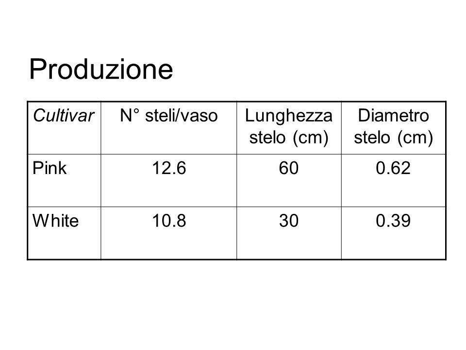 Produzione CultivarN° steli/vasoLunghezza stelo (cm) Diametro stelo (cm) Pink12.6600.62 White10.8300.39
