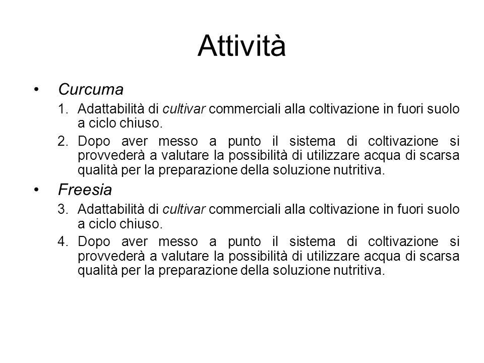 Attività Curcuma 1.Adattabilità di cultivar commerciali alla coltivazione in fuori suolo a ciclo chiuso. 2.Dopo aver messo a punto il sistema di colti