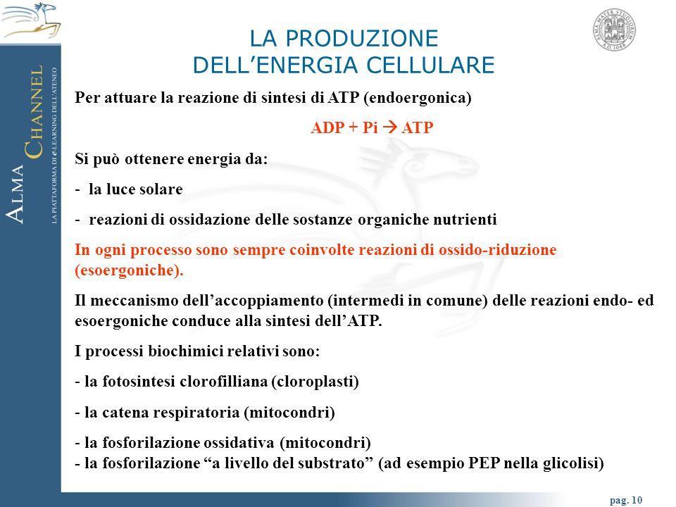 pag. 10 LA PRODUZIONE DELL'ENERGIA CELLULARE Per attuare la reazione di sintesi di ATP (endoergonica) ADP + Pi  ATP Si può ottenere energia da: - la