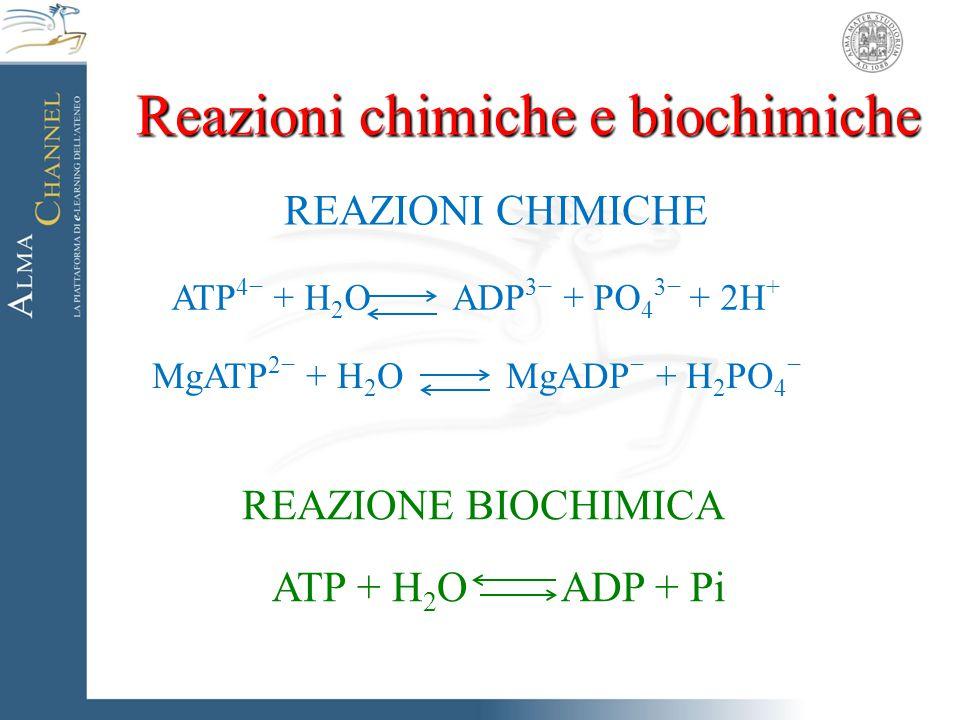 REAZIONI CHIMICHE ATP 4− + H 2 O ADP 3− + PO 4 3− + 2H + MgATP 2− + H 2 O MgADP − + H 2 PO 4 − REAZIONE BIOCHIMICA ATP + H 2 O ADP + Pi Reazioni chimi