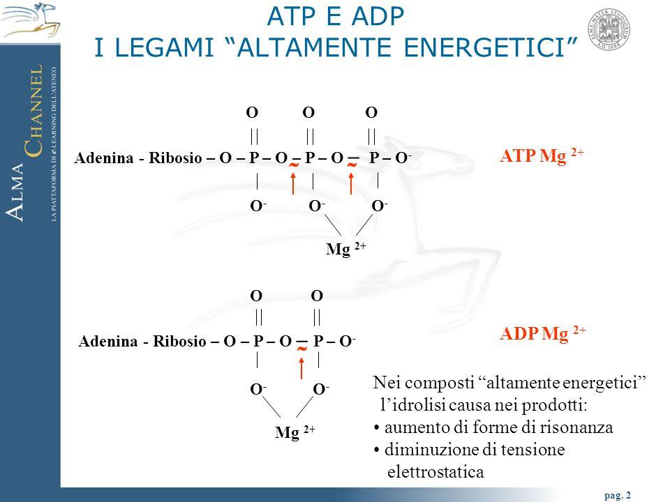 "pag. 2 ATP E ADP I LEGAMI ""ALTAMENTE ENERGETICI"" O O O Adenina - Ribosio – O – P – O – P – O – P – O - O - O - O - Mg 2+ ATP Mg 2+ O Adenina - Ribosio"
