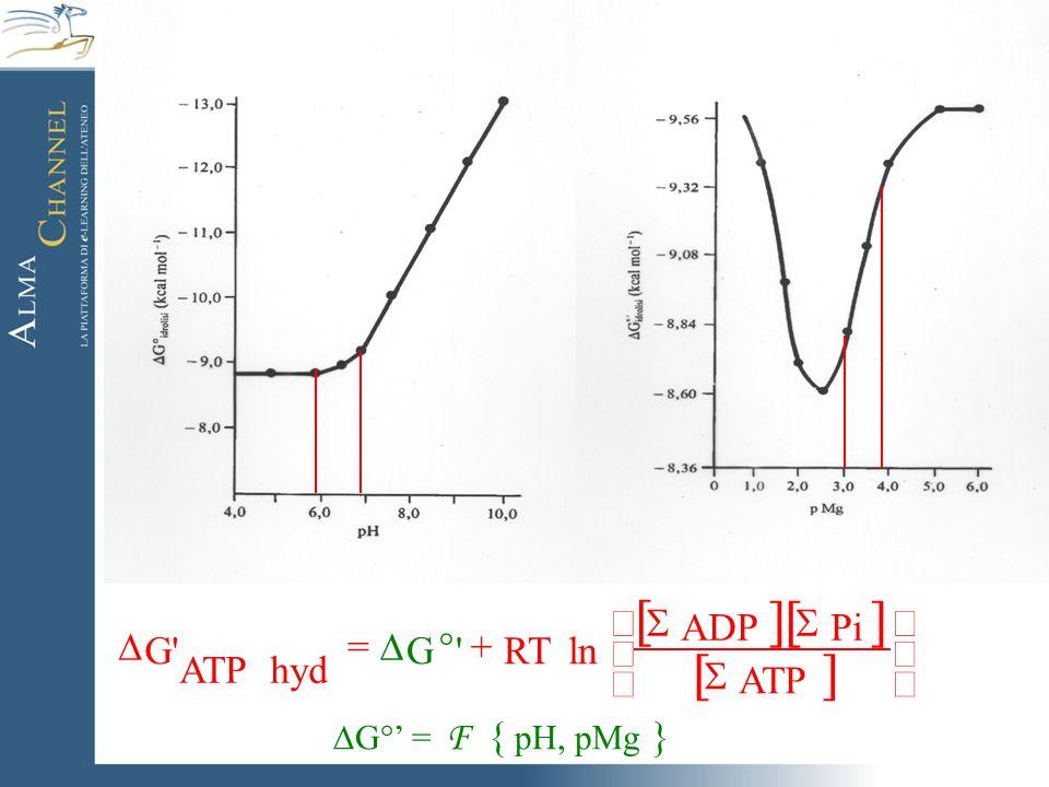         +  =  ATP Pi ADP ln RT 'G hyd ATP G'  G°' = F { pH, pMg }