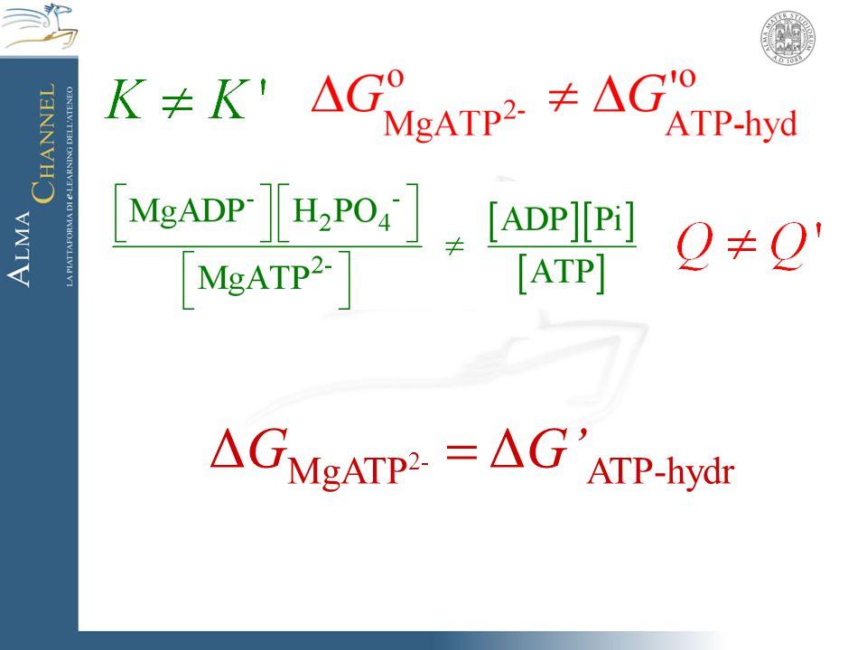 ΔG MgATP 2-  ΔG' ATP-hydr