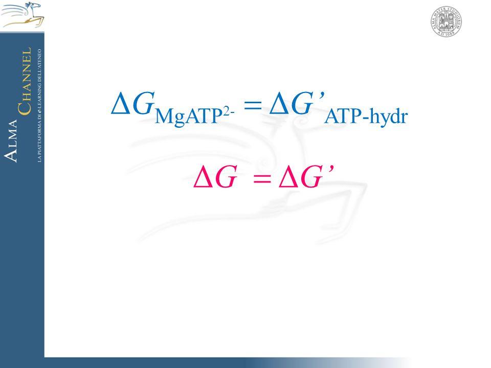 ΔG MgATP 2-  ΔG' ATP-hydr ΔG  ΔG'