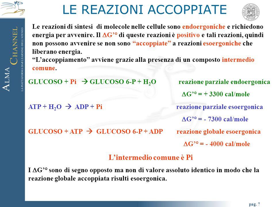 pag. 7 GLUCOSO + Pi  GLUCOSO 6-P + H 2 O reazione parziale endoergonica  G'° = + 3300 cal/mole ATP + H 2 O  ADP + Pi reazione parziale esoergonica