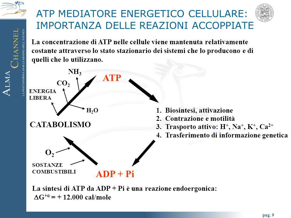 pag. 9 ATP 1.Biosintesi, attivazione 2.Contrazione e motilità 3.Trasporto attivo: H +, Na +, K +, Ca 2+ 4.Trasferimento di informazione genetica ADP +