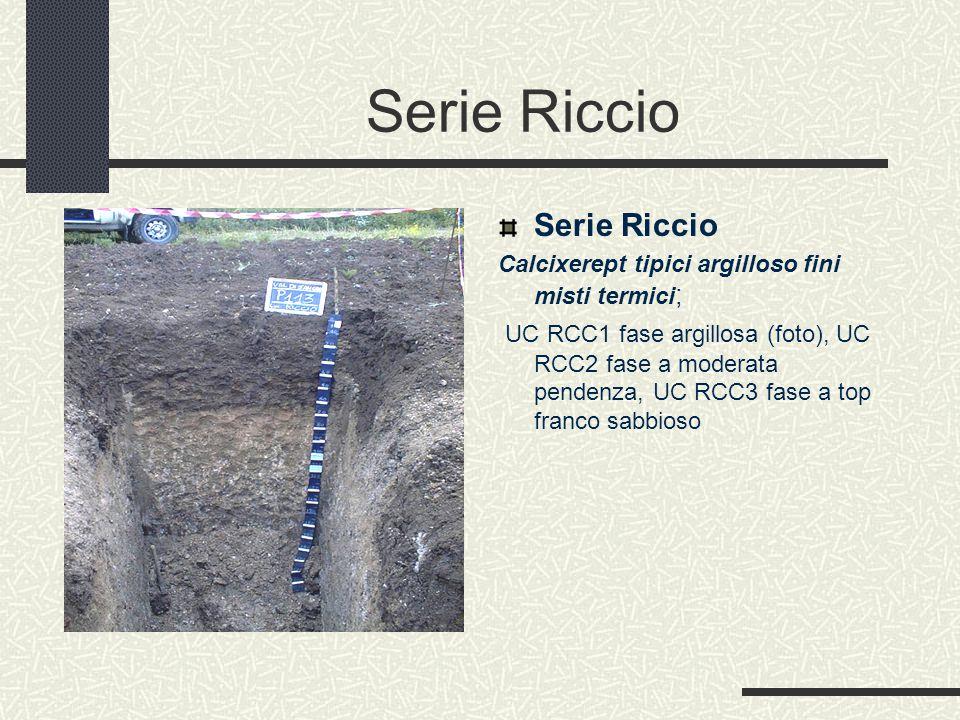 Serie Riccio Calcixerept tipici argilloso fini misti termici ; UC RCC1 fase argillosa (foto), UC RCC2 fase a moderata pendenza, UC RCC3 fase a top franco sabbioso