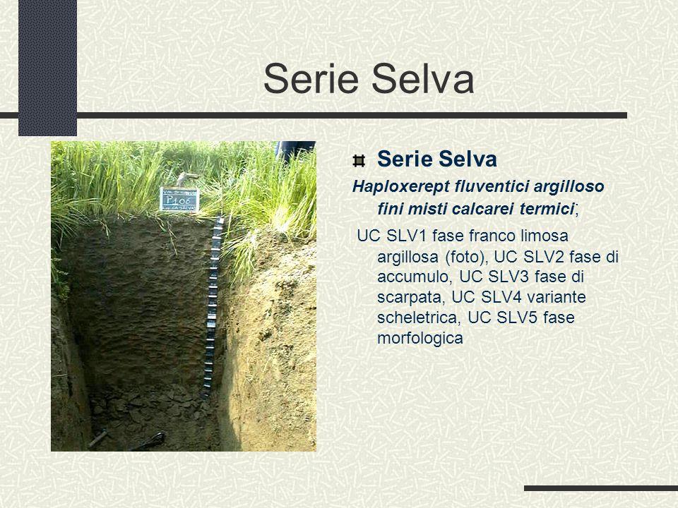Serie Selva Haploxerept fluventici argilloso fini misti calcarei termici ; UC SLV1 fase franco limosa argillosa (foto), UC SLV2 fase di accumulo, UC SLV3 fase di scarpata, UC SLV4 variante scheletrica, UC SLV5 fase morfologica