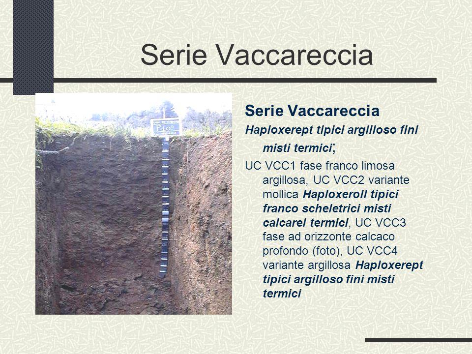Serie Vaccareccia Haploxerept tipici argilloso fini misti termici ; UC VCC1 fase franco limosa argillosa, UC VCC2 variante mollica Haploxeroll tipici franco scheletrici misti calcarei termici, UC VCC3 fase ad orizzonte calcaco profondo (foto), UC VCC4 variante argillosa Haploxerept tipici argilloso fini misti termici