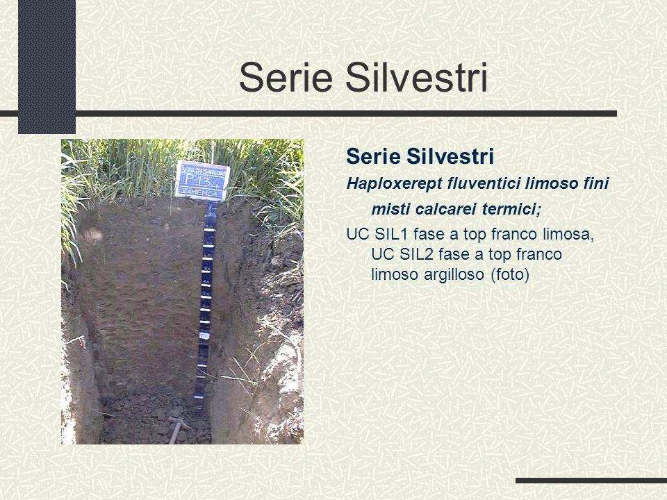 Serie Silvestri Haploxerept fluventici limoso fini misti calcarei termici; UC SIL1 fase a top franco limosa, UC SIL2 fase a top franco limoso argilloso (foto)