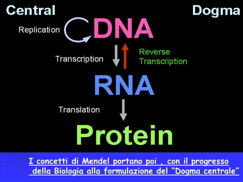 I concetti di Mendel portano poi, con il progresso della Biologia alla formulazione del Dogma centrale
