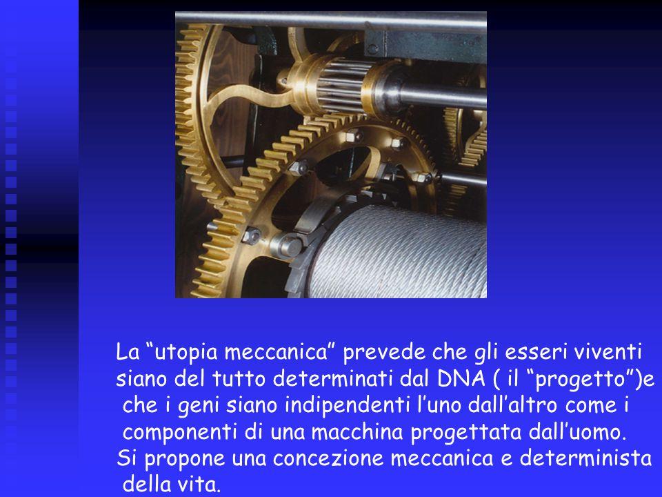 La utopia meccanica prevede che gli esseri viventi siano del tutto determinati dal DNA ( il progetto )e che i geni siano indipendenti l'uno dall'altro come i componenti di una macchina progettata dall'uomo.