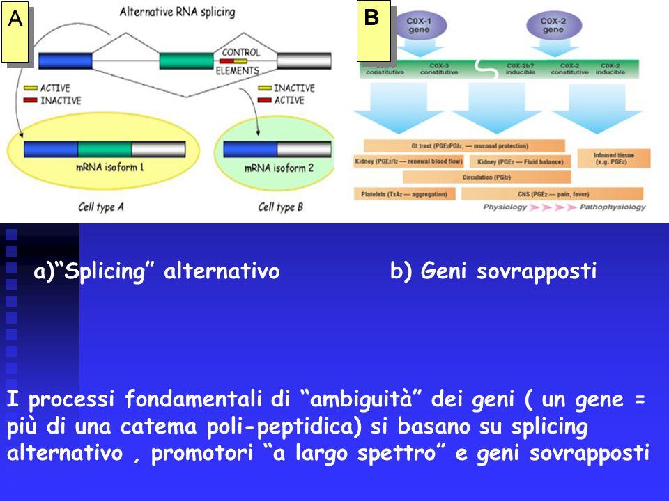 A A B B I processi fondamentali di ambiguità dei geni ( un gene = più di una catema poli-peptidica) si basano su splicing alternativo, promotori a largo spettro e geni sovrapposti a) Splicing alternativob) Geni sovrapposti