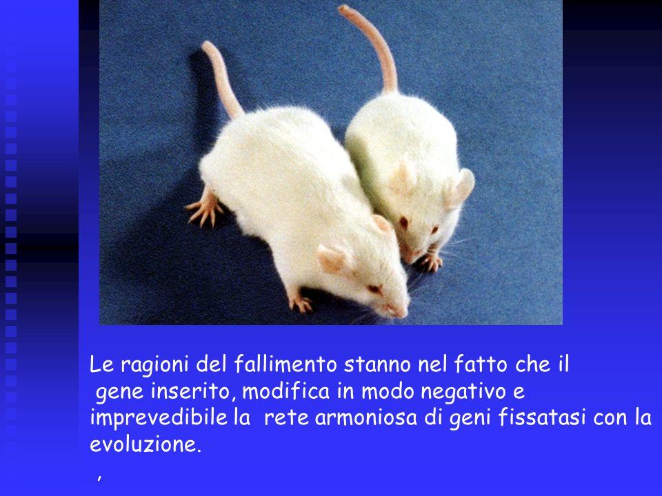 Le ragioni del fallimento stanno nel fatto che il gene inserito, modifica in modo negativo e imprevedibile la rete armoniosa di geni fissatasi con la evoluzione.,