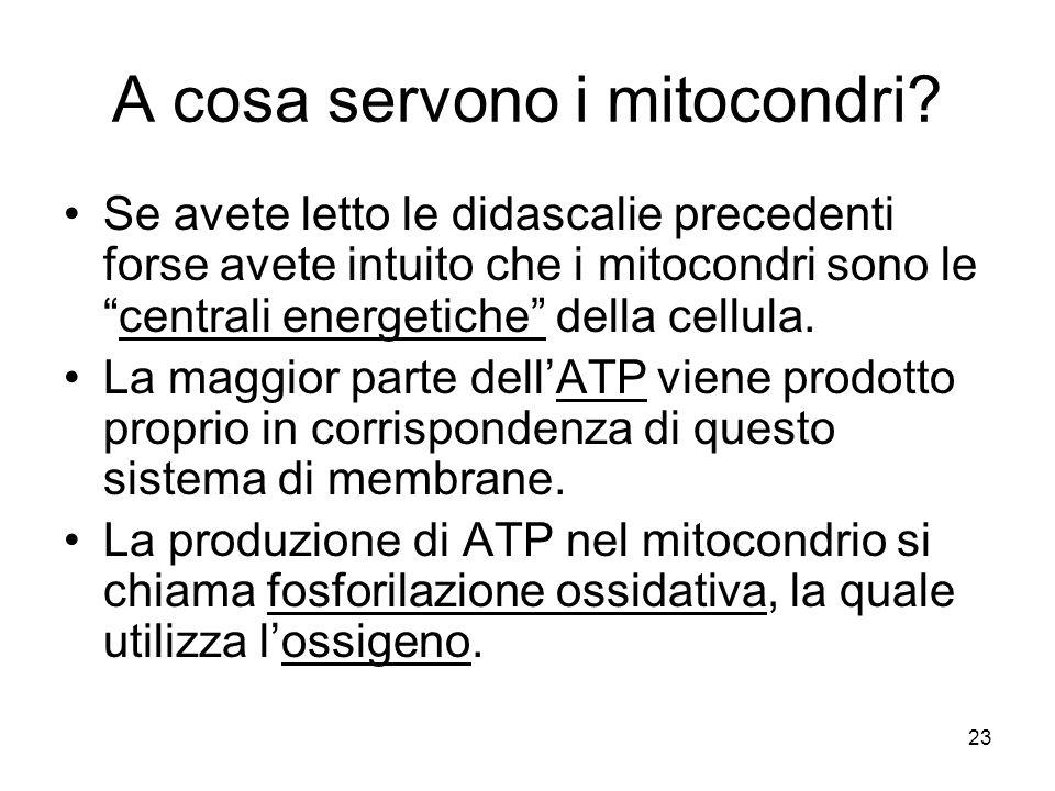 """23 A cosa servono i mitocondri? Se avete letto le didascalie precedenti forse avete intuito che i mitocondri sono le """"centrali energetiche"""" della cell"""