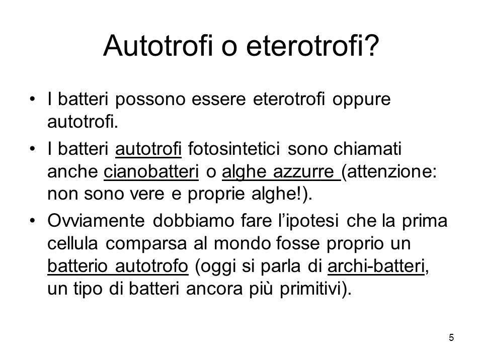 5 Autotrofi o eterotrofi? I batteri possono essere eterotrofi oppure autotrofi. I batteri autotrofi fotosintetici sono chiamati anche cianobatteri o a