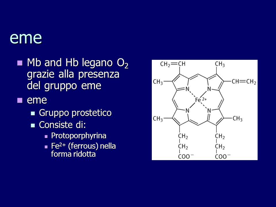 Mioglobina (Mb) Mb è una proteina di tipo globulare Mb è una proteina di tipo globulare Gruppo eme inserito nel centro della catena Gruppo eme inserito nel centro della catena Residui Non-polari proteggono Fe 2+ dall'ossidazione a Fe 3+ (Hematin) Residui Non-polari proteggono Fe 2+ dall'ossidazione a Fe 3+ (Hematin)
