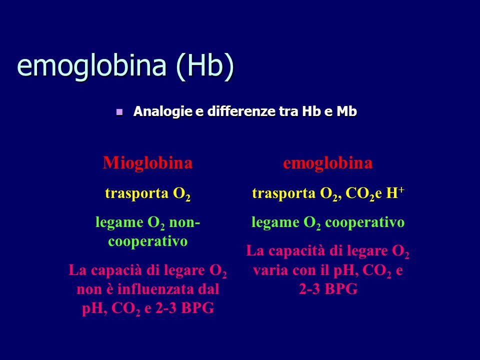 emoglobina (Hb) Analogie e differenze tra Hb e Mb Analogie e differenze tra Hb e Mb Mioglobina trasporta O 2 legame O 2 non- cooperativo La capacià di