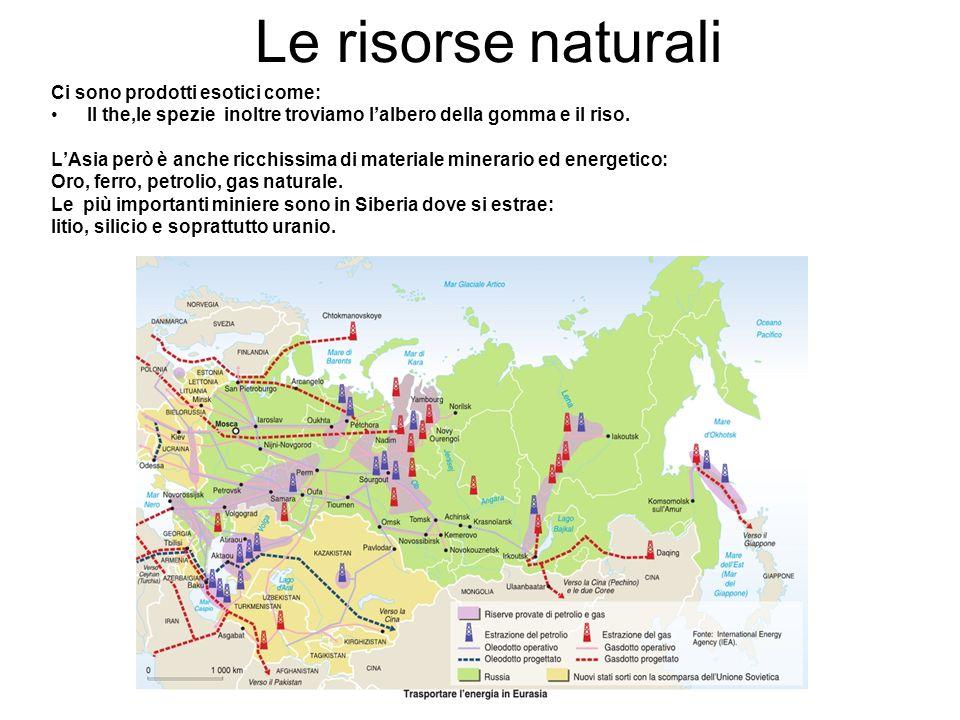 Le risorse naturali Ci sono prodotti esotici come: Il the,le spezie inoltre troviamo l'albero della gomma e il riso. L'Asia però è anche ricchissima d
