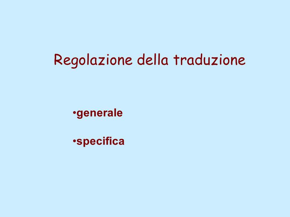 Regolazione della traduzione generale specifica