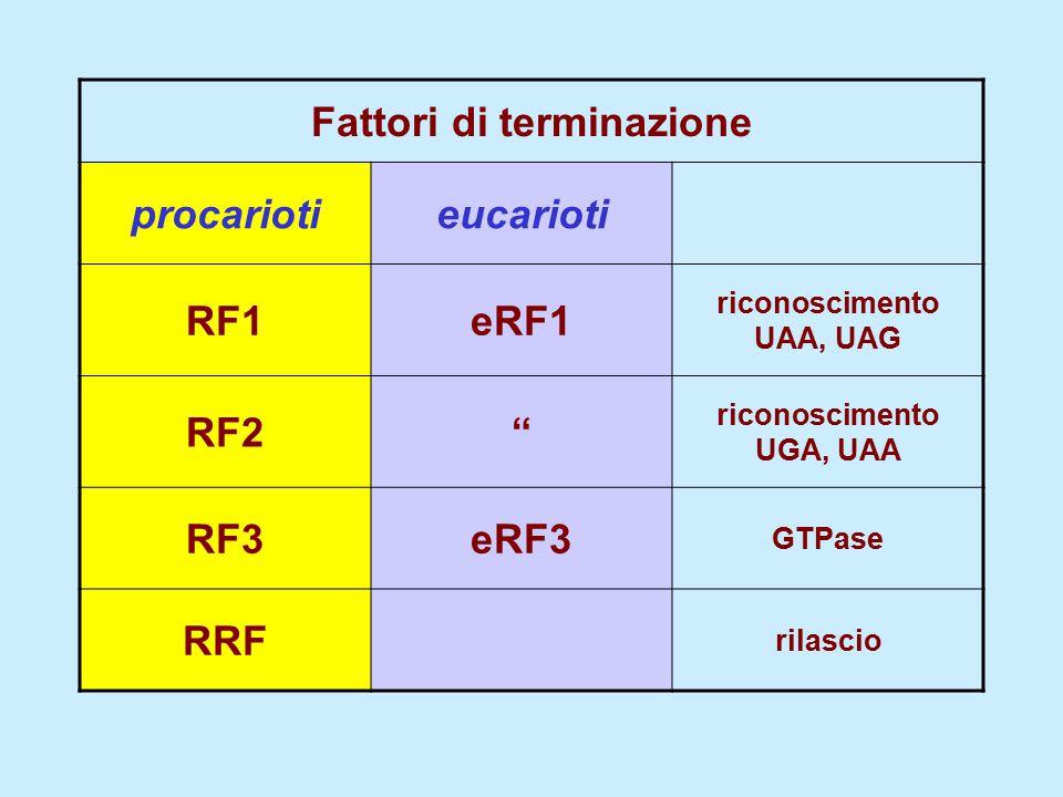 Fattori di terminazione procariotieucarioti RF1eRF1 riconoscimento UAA, UAG RF2 riconoscimento UGA, UAA RF3eRF3 GTPase RRF rilascio