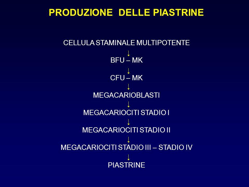 PRODUZIONE DELLE PIASTRINE CELLULA STAMINALE MULTIPOTENTE BFU – MK CFU – MK MEGACARIOBLASTI MEGACARIOCITI STADIO I MEGACARIOCITI STADIO II MEGACARIOCI