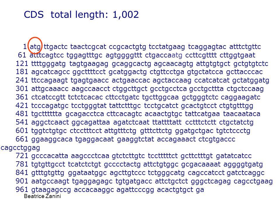 Beatrice Zanini CDS total length: 1,002 1 atg ttgactc taactcgcat ccgcactgtg tcctatgaag tcaggagtac atttctgttc 61 atttcagtcc tggagtttgc agtggggttt ctgac