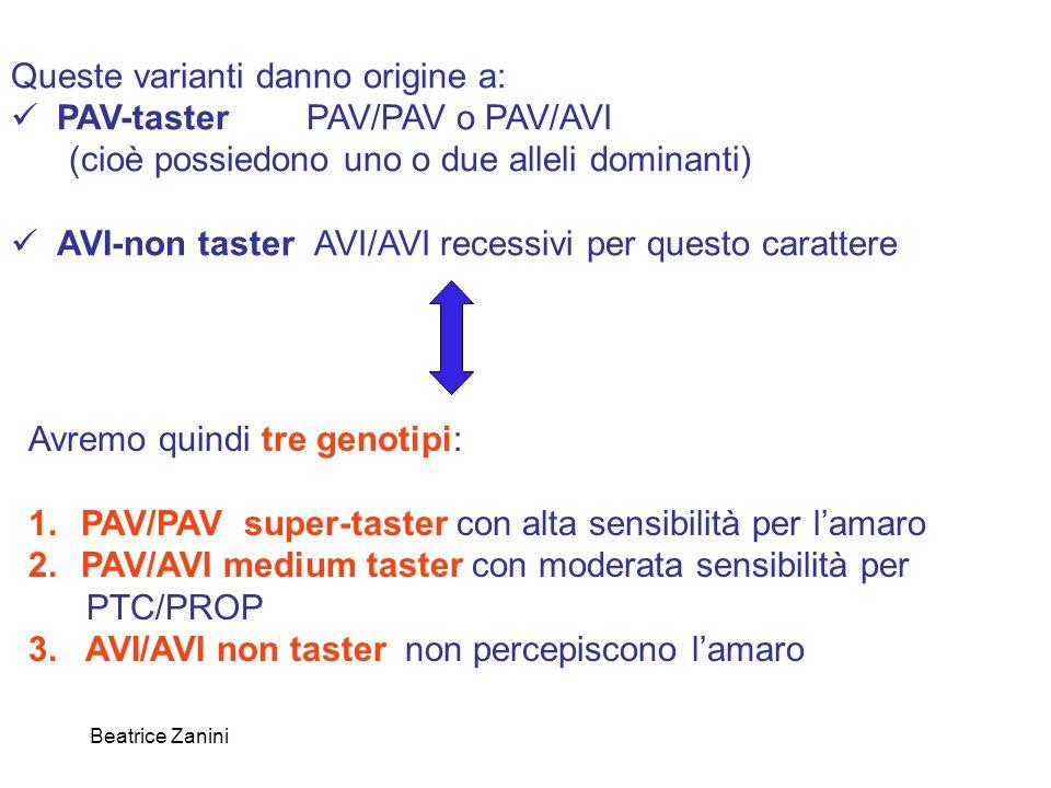 Beatrice Zanini Queste varianti danno origine a: PAV-taster PAV/PAV o PAV/AVI (cioè possiedono uno o due alleli dominanti) AVI-non taster AVI/AVI rece