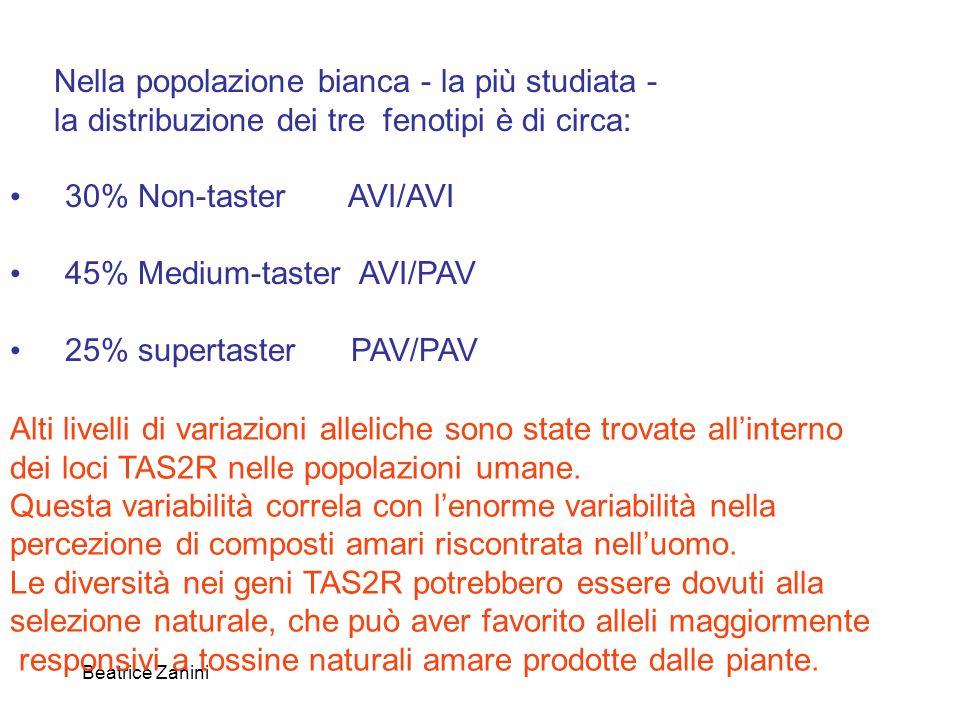 Beatrice Zanini Nella popolazione bianca - la più studiata - la distribuzione dei tre fenotipi è di circa: 30% Non-taster AVI/AVI 45% Medium-taster AV
