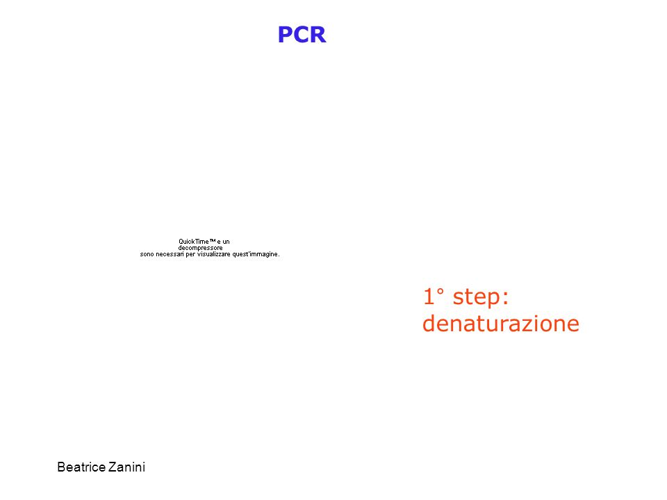 Beatrice Zanini PCR 1° step: denaturazione