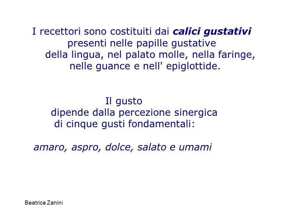 Beatrice Zanini I recettori sono costituiti dai calici gustativi presenti nelle papille gustative della lingua, nel palato molle, nella faringe, nelle