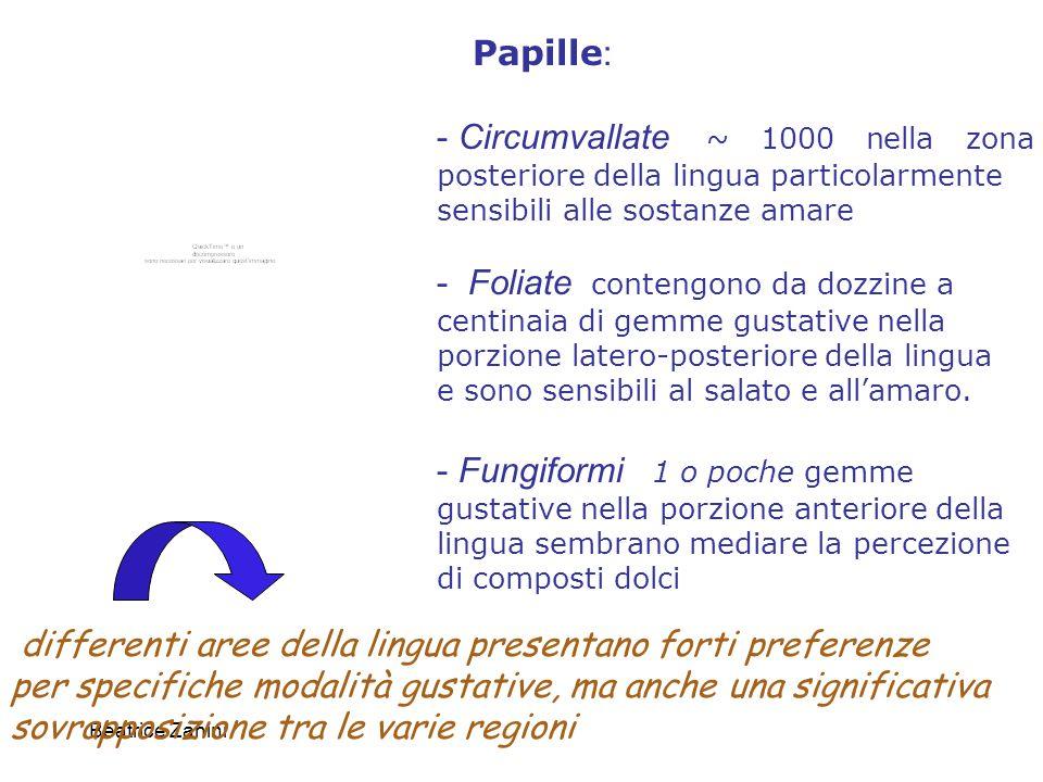 Beatrice Zanini Papille : - Circumvallate ~ 1000 nella zona posteriore della lingua particolarmente sensibili alle sostanze amare - Foliate contengono