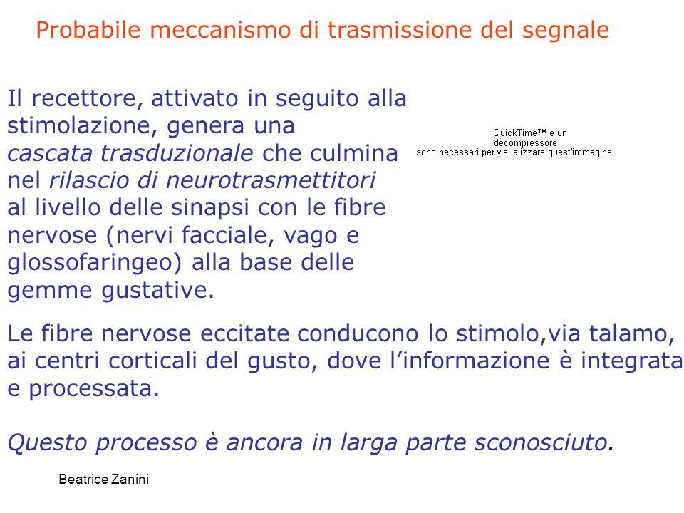 Beatrice Zanini Il recettore, attivato in seguito alla stimolazione, genera una cascata trasduzionale che culmina nel rilascio di neurotrasmettitori a