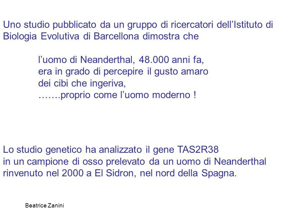 Beatrice Zanini Uno studio pubblicato da un gruppo di ricercatori dell'Istituto di Biologia Evolutiva di Barcellona dimostra che l'uomo di Neanderthal