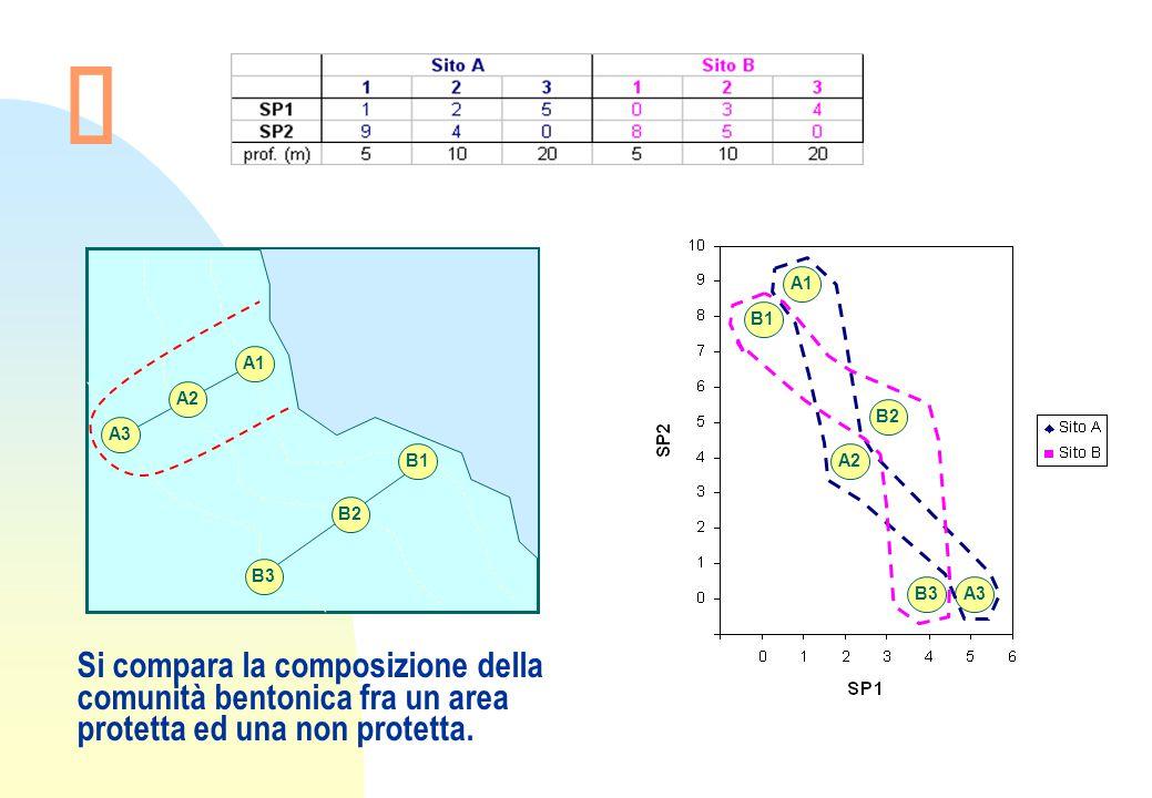 A1 A2 A3 B1 B2 B3 A1 A2 A3 B1 B2 B3 Si compara la composizione della comunità bentonica fra un area protetta ed una non protetta.