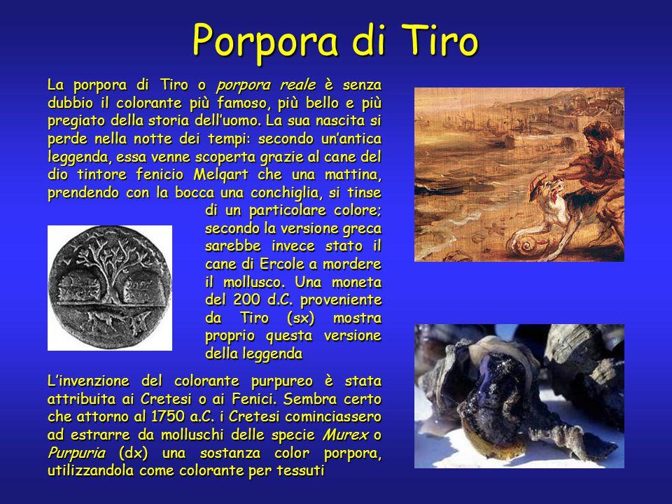 Porpora di Tiro La porpora di Tiro o porpora reale è senza dubbio il colorante più famoso, più bello e più pregiato della storia dell'uomo.