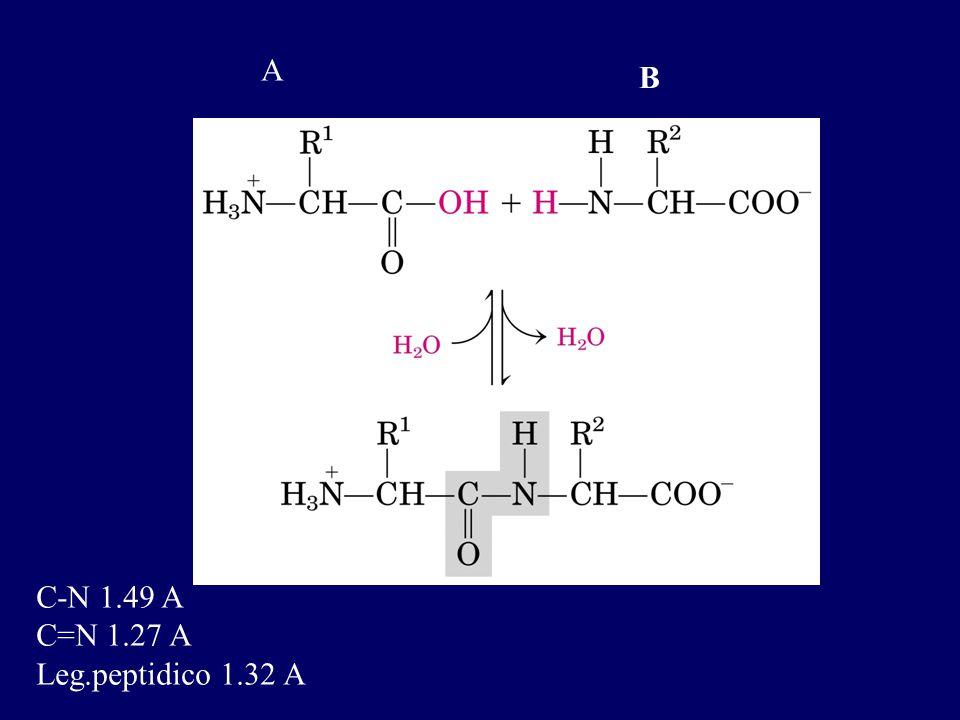 A B C-N 1.49 A C=N 1.27 A Leg.peptidico 1.32 A