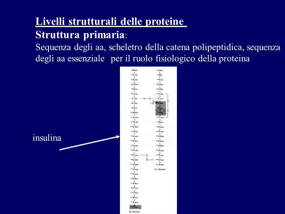 Livelli strutturali delle proteine Struttura primaria : Sequenza degli aa, scheletro della catena polipeptidica, sequenza degli aa essenziale per il ruolo fisiologico della proteina insulina