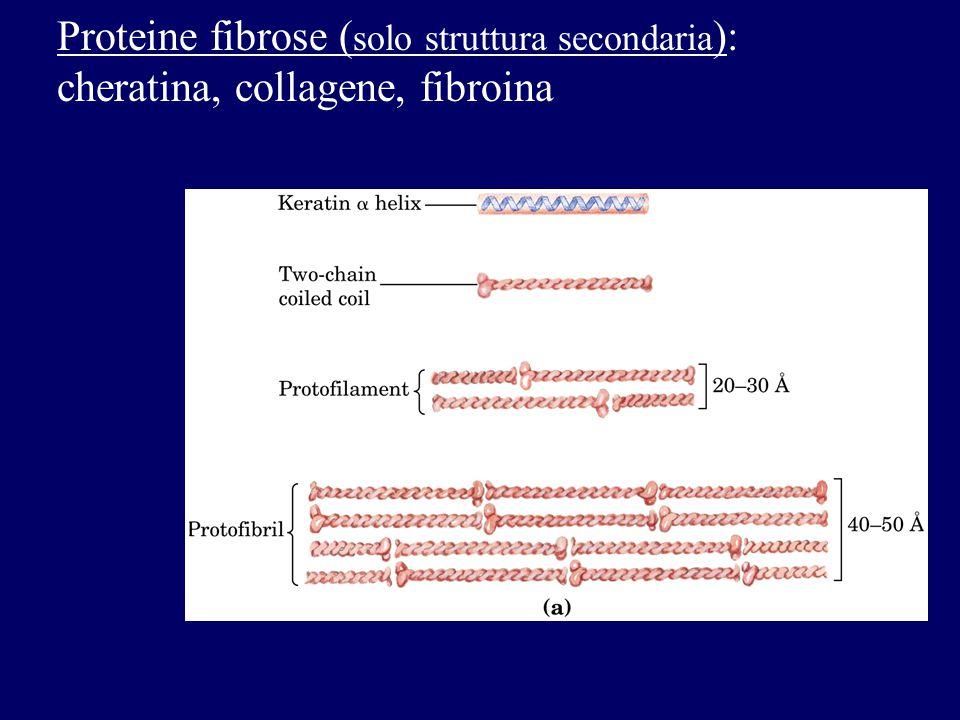 Proteine fibrose ( solo struttura secondaria ): cheratina, collagene, fibroina