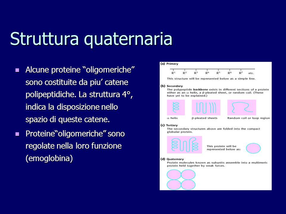 Struttura quaternaria Alcune proteine oligomeriche sono costituite da piu' catene polipeptidiche.