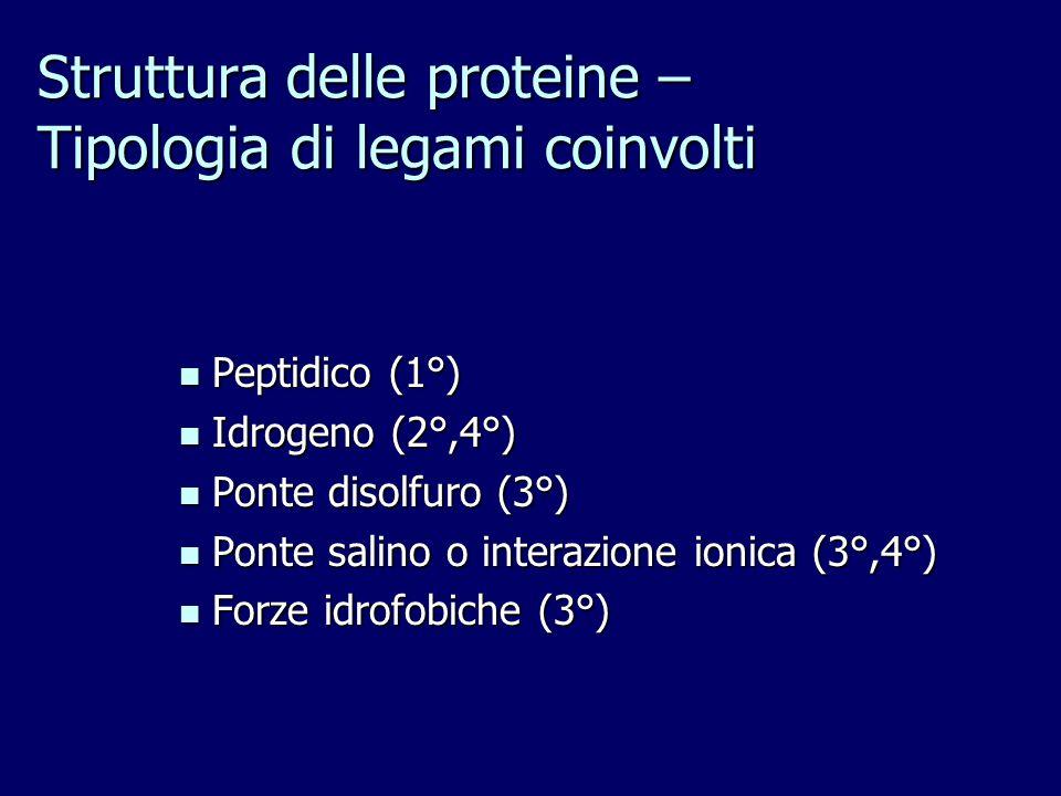 Struttura delle proteine – Tipologia di legami coinvolti Peptidico (1°) Peptidico (1°) Idrogeno (2°,4°) Idrogeno (2°,4°) Ponte disolfuro (3°) Ponte disolfuro (3°) Ponte salino o interazione ionica (3°,4°) Ponte salino o interazione ionica (3°,4°) Forze idrofobiche (3°) Forze idrofobiche (3°)