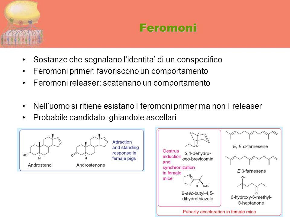 Feromoni Sostanze che segnalano l'identita' di un conspecifico Feromoni primer: favoriscono un comportamento Feromoni releaser: scatenano un comportam