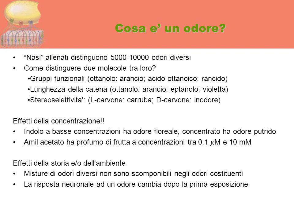 """Cosa e' un odore? """"Nasi"""" allenati distinguono 5000-10000 odori diversi Come distinguere due molecole tra loro? Gruppi funzionali (ottanolo: arancio; a"""