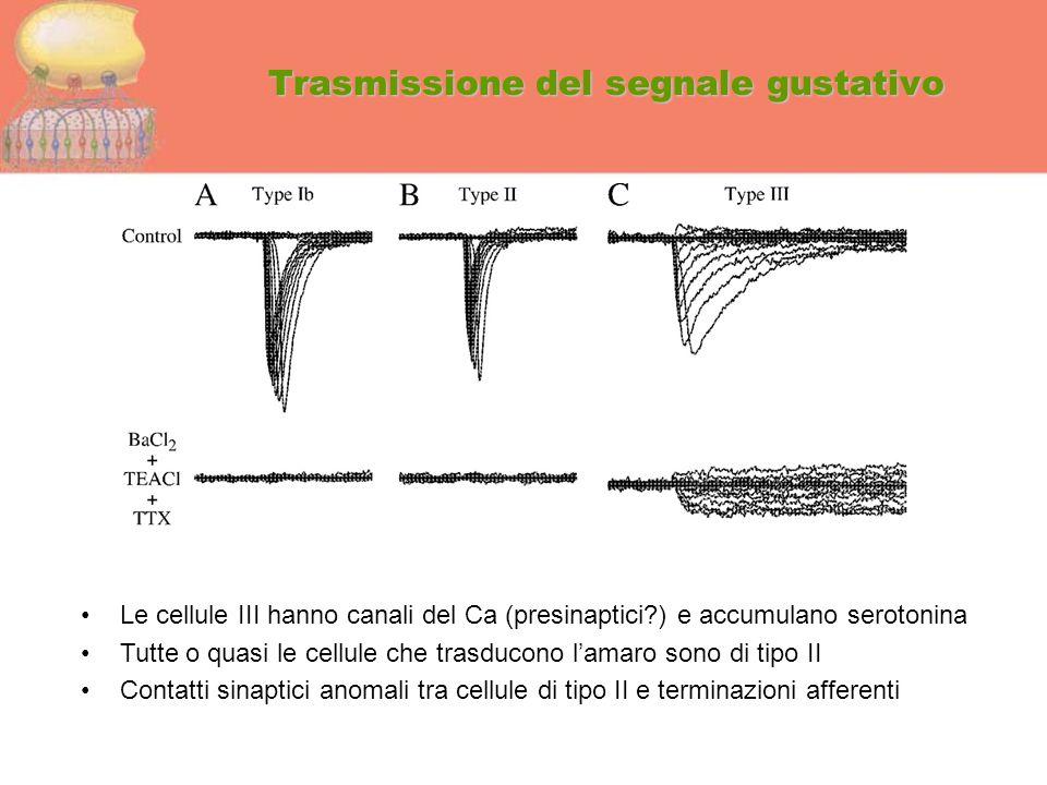 Trasmissione del segnale gustativo Le cellule III hanno canali del Ca (presinaptici?) e accumulano serotonina Tutte o quasi le cellule che trasducono