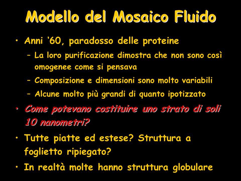Modello del Mosaico Fluido Anni '60, paradosso delle proteine –La loro purificazione dimostra che non sono così omogenee come si pensava –Composizione